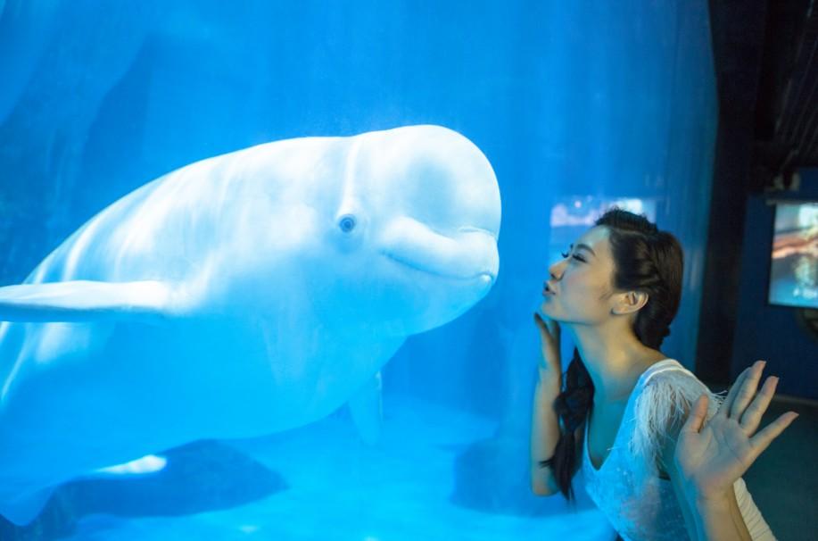 武汉海昌极地海洋世界是海昌集团继大连老虎滩极地馆、青岛极地馆、天津极地海洋世界、成都极地海洋世界之后,为布局华中,投资建设的第五座涵盖极地与海洋概念的大型主题公园,仅场馆建设耗资就达7亿元。它的建成开业意味着一个新的旅游业态在武汉诞生,预示着武汉旅游主题公园新时代的到来。武汉极地海洋世界是多层多馆组合式室内极地海洋主题公园。场馆的外型犹如一只巨大的白鲸,跃入江城武汉,填补了武汉乃至华中地区大型主题公园的空白。  通过极地与海洋珍稀动物 和鱼类(帝企鹅、北极熊、伪虎鲸、白鲸、海象、海豚等)的展示、表演与互动