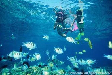 壁纸 海底 海底世界 海洋馆 水族馆 桌面 395_265
