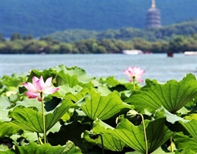 [1-Day Tour] West Lake & Feilai Peak (Private)