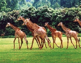 [Ticket] Chimelong Safari Park 1-Day Adult (normal day, aged under 65)