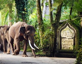[Half-Day Tour] Elephant Safari Park (Group, includes lunch)<br>[Visa Exclusive 2017]