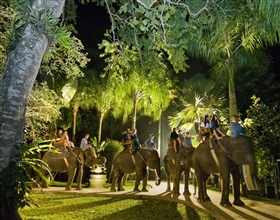 [Evening Tour] Elephant Night Safari Tour (Group)<br>[Visa Exclusive 2017]
