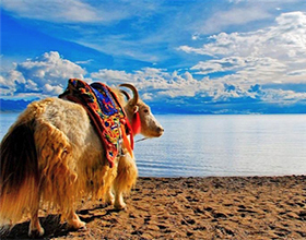 [6-Day Tour] Lhasa & Namtso Lake (Group)