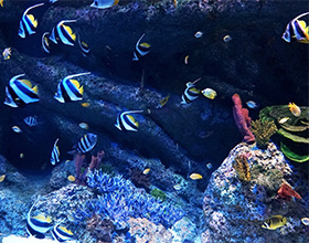S.E.A. Aquarium™ 1-Day Pass Adult Admission (aged 13-59)