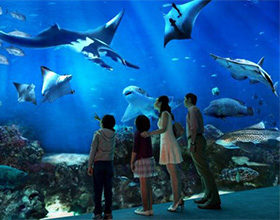 S.E.A. Aquarium™ 1-Day Pass Child Admission (aged 4-12)