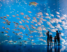 [Ticket] Chimelong Ocean Kingdom 1-Day Adult (normal day, aged under 65)