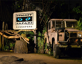 Night Safari Adult Admission (aged 13 or above)