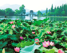 [1-Day Tour] West Lake, Leifeng Pagoda & Nanshan Road (Private)