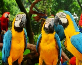 Chimelong Birds Park 1-Day Adult Admission