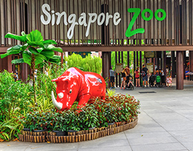 Singapore Zoo Adult Admission + Tram Ride (aged 13 or above)