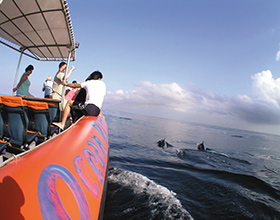 [1-Day Tour] Dolphin Watching Cruise (Group)