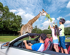 Chimelong Safari Park 1-Day Adult Admission (designated day, aged under 65)