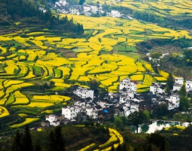 [1-Day Tour] Xidi & Hongcun Villages (Private)