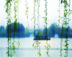 [Half-Day Tour] Classic Hangzhou (Small group)