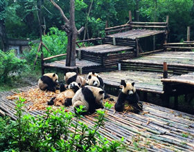 [1-Day Tour] Chengdu City Highlights & Panda Breeding Center (Small Group, includes lunch)