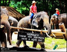 [Half-Day Tour] Elephant Trekking (1 hour) @ Elephant Village (Group, without guide)