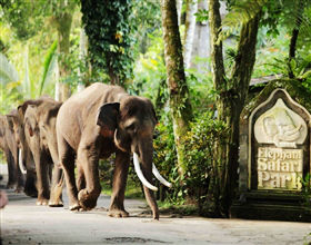 [1-Day Tour] Bali Elephant Park @ Taro Ubud (Private, includes lunch & dinner)<br>[Visa Exclusive 2017]