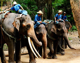 [1-Day Tour] Chiang Dao Elephant Camp (Group, includes lunch)