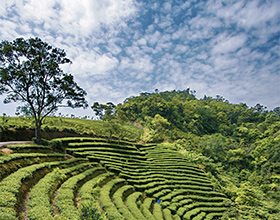 [Half-Day Tour] Thousand Island Lake & Pinglin Tea Plantation Scenery (Group)