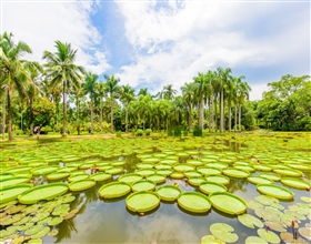 [1-Day Tour] Xishuangbanna Tropical Botanical Garden (Private)