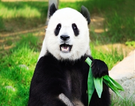 [1-Day Tour] Panda Base & Wenshu Temple (Private)
