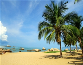 [1-Day Tour] Sanya Yanoda Rainforest (Private)