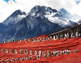 [1-Day Tour] Yulong Xue Shan & Impression Lijiang (Private)